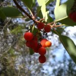 Dibben Forest Reserve5