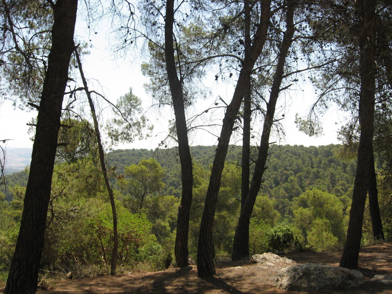 Dibben Forest Reserve